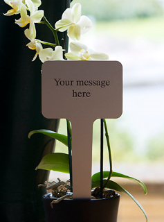 Tree Gift Plaque - Your Message Here